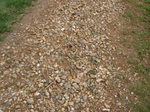 Loose surface stones on path following winter damage